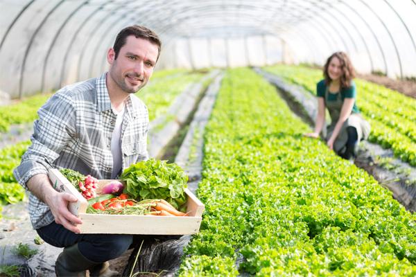 Corso di formazione gratuito – Innovazione Giovani Agricoltori Professionali